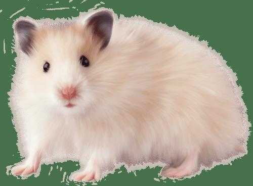 mi hamster muerde