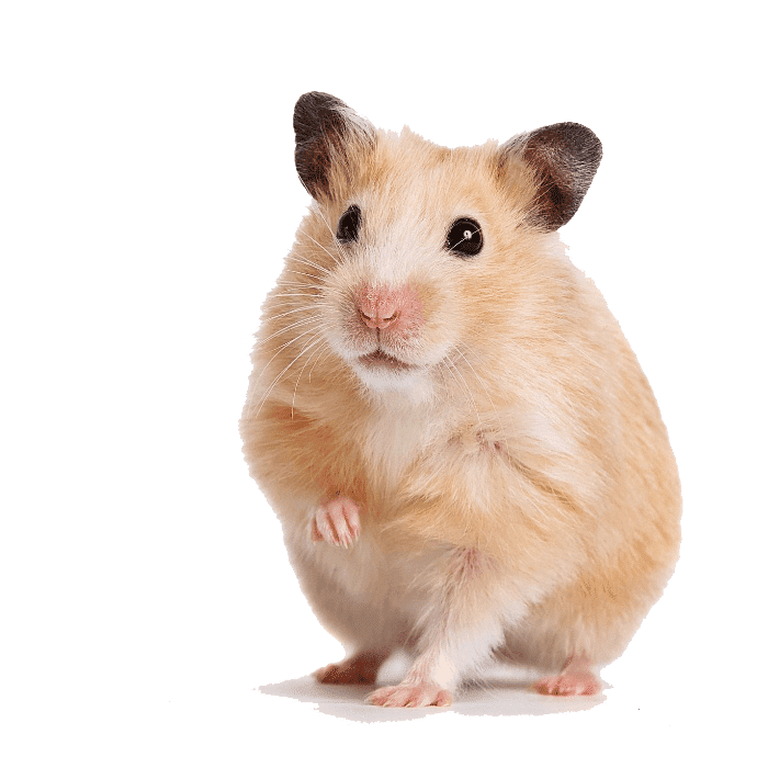 tips hamsters