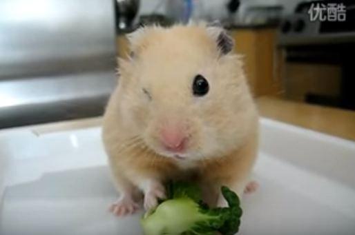 ojo cerrado hamster