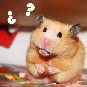 ¿Mi hamster se siente solo?