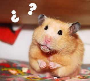 limpieza rueda hamster