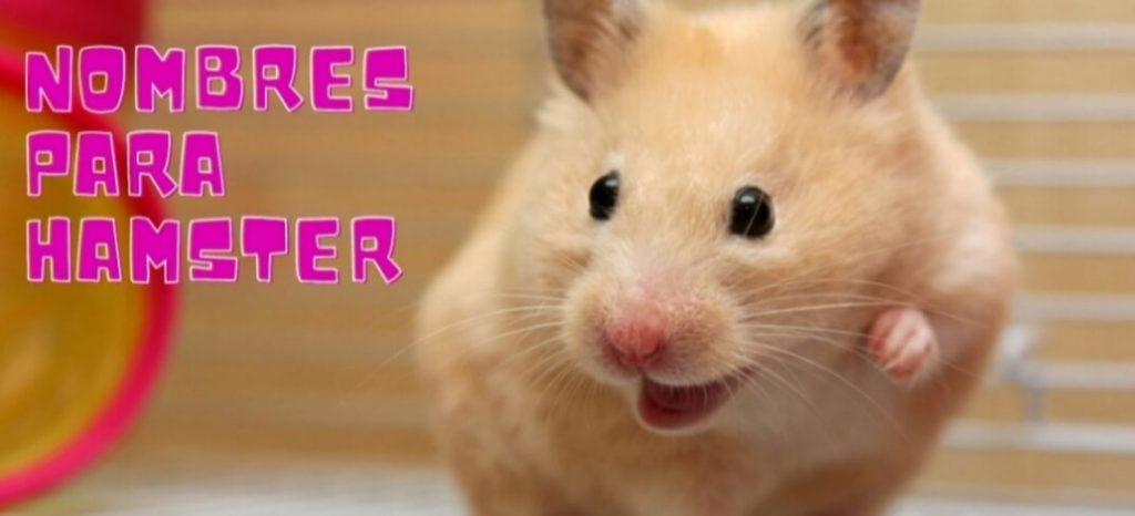 Nombres hamster