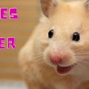 Más de 100 Ideas De Nombres Para hamster